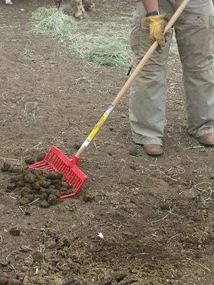 shovel manure cropped